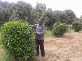 KU's Dr. Meshack Onyambu's Paper on Herbal Products on KEBS Agenda